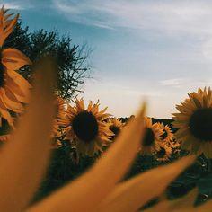 Buy boho style accessories and home decor online Flowery Wallpaper, Sunflower Wallpaper, Flower Phone Wallpaper, Love Flowers, My Flower, Pocket Full Of Sunshine, Flying Flowers, Funny Iphone Wallpaper, Plants Are Friends