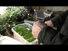 ▶ Propagation of Streptocarpus - YouTube