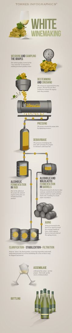 White Wine Making Process Inforgraphic