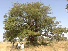 Planter des arbres pour soutenir l'agriculture locale au Burkina Faso