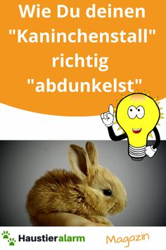 Jetzt die Tipp´s ansehen!... Rabbit, Animals, Rodents, Insects, Pet Health, Nature, Tips, Bunny, Rabbits