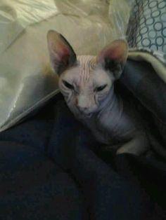 My niece's Nekkid Kitty 2012