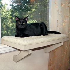 Imagine Scruffy, not a cat - a Scruffy window seat. He looks just like BluePurr.