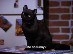 sabrina the teenage witch gifs - Google Search