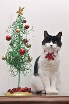 Christmas cat with his own tree Funholidaycats.com