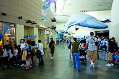 The Aquarium of the Pacific was the first museum in the nation to register its greenhouse gases and is a leader in green practices, including two LEED® Platinum exhibits: the Our Watersheds exhibit and the Molina Animal Care Center.
