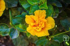 Vivero Tropical | Arbustos