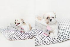 No-Sew Pet Bed