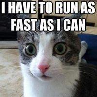 25 funny cat memes, part 2