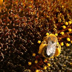 Covered With Yellow Pollen