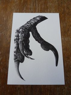 Crow Claw A5 giclee print, black and white illustration, biro drawing, bird claw