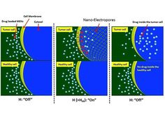 Nanoparticle Helps Eradicate an Ovarian Tumor in a Day - IEEE Spectrum