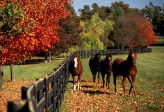 horses and fall