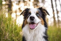 5 Dog Photography Ideas You Can Shoot At Home www.prettyfluffy.com
