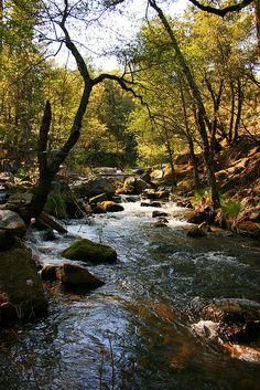 Our water may be contaminated by hormone-disrupting pollutants. Scientists have discovered that harmful concentrations of Bisphenol-A (BPA) may have been deposited directly into rivers and streams by municipal or industrial wastewater. Relaxing Photos, Forest Mountain, Closer To Nature, Painting Videos, Science Nature, Fresh Water, Serenity, Natural Beauty, Rivers