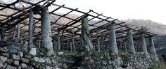 http://www.rossobiancobolle.com/carema-uno-nessuno-101/  Cantina del Produttori dei Nebbiolo di Carema