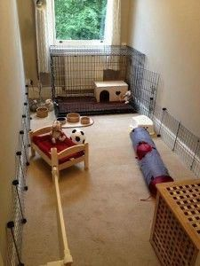 with access to a full room & well bunny proofed skirting boards.crate, with access to a full room & well bunny proofed skirting boards. Bunny Cages, Rabbit Cages, Rabbit Toys, Pet Rabbit, Jack Rabbit, Indoor Rabbit House, House Rabbit, Hamsters, Bunny Room