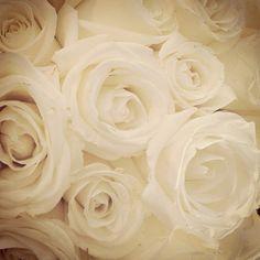 Ivory beauty