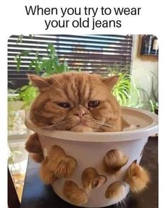 Foster Kittens, Cats And Kittens, Funny Cat Memes, Funny Dogs, Funny Quotes, Craft Projects For Kids, Old Jeans, Kinds Of Cats, Wholesome Memes