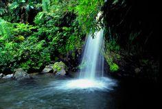 El+Yunque+Puerto+Rico   Quebrada Juan Diego, El Yunque Rainforest, Puerto Rico.