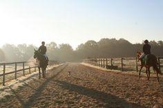 Eure, haras d'entraînement CSO sur 21 ha Railroad Tracks, Couple Photos, Horse Farms, Couple Pics, Couple Photography