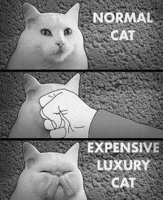 Make Your Cat Look Expensive