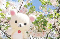 Image uploaded by bella. Find images and videos about flowers, japan and sakura on We Heart It - the app to get lost in what you love. Aesthetic Objects, Pink Aesthetic, Japanese Aesthetic, Baby Kittens, Kawaii Shop, Rilakkuma, Everything Pink, Sanrio, Cute Cartoon