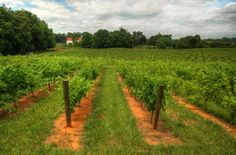 Knob Hall, Briar Valley, Mazza wines are top winners at International East