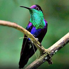 ¡Un colibrí ...! la dulzura - Taringa!