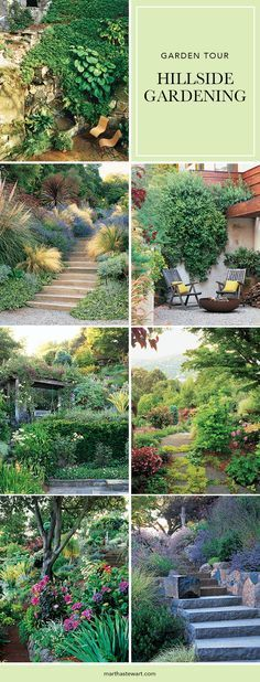 For all the drama they add to a landscape, hillsides present their own set of problems. Here's how to cope with a steep learning curve.  In Robin Benson's garden in the Hollywood Hills, purple hop bush and silver echium climb a hill, their colors echoing the succulents and shrubs that have been planted below to soften the hard lines of a poolside retaining wall.