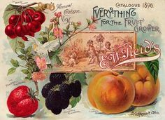 """Vintage catalog: E.W. Reid's, 1896 """"Everything for the Fruit Grower"""""""