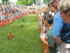 Wiener Dog races are back at Spass Tagen!