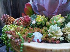 I want a grand pot of wee, colorful succulents and cacti. Colorful Succulents, Succulents In Containers, Cacti And Succulents, Planting Succulents, Planting Flowers, Succulent Gardening, Succulent Pots, Organic Gardening, Container Gardening