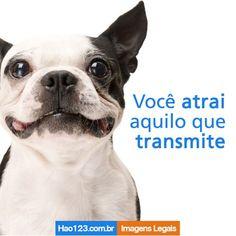 Você atrai o que transmite. E aí, carinho sempre. vamos?  #hao123 #Fofurinhas #puppies