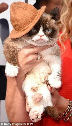 Who wore it better?: The two-year-old cat had a miniature version of Pharrell Williams' famous hat perched on one ear / April 14, 2014 #Tard #GrumpyCat #TardarSauce