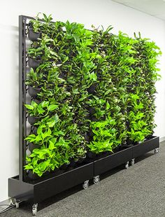 Mobile Green Wall Irrigation and irrigation systems for vertical garden forms. Mobile Green Wall I Planting Bulbs In Spring, Outdoor Wood Table, Vertikal Garden, Vertical Garden Design, Garden Solutions, Garden In The Woods, Diy Garden, Edible Plants, Pergola Designs