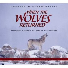 When the Wolves Returned: Restoring Nature's Balance in Yellowstone by Dorothy Hinshaw Patent Yellowstone National Park, National Parks, Teaching Main Idea, Teaching Ideas, List Of Activities, Activity List, Everything Is Connected, This Is A Book, Mentor Texts