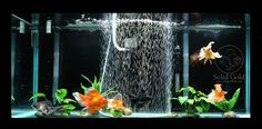 Great goldfish care tips!