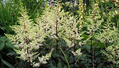 10 perennials that flower in the shade by Ellen Novack.  The blooms are an added bonus in these low-light-loving plants...read on....