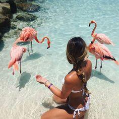 Пляж фламинго « FotoRelax