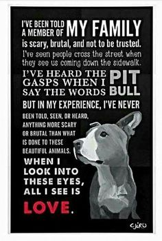 Uplifting So You Want A American Pit Bull Terrier Ideas. Fabulous So You Want A American Pit Bull Terrier Ideas. Pitbull Terrier, Bull Terriers, Dogs Pitbull, Terrier Dogs, Pitbulls, Nanny Dog, Dog Shaming, Pit Bull Love, American Pit