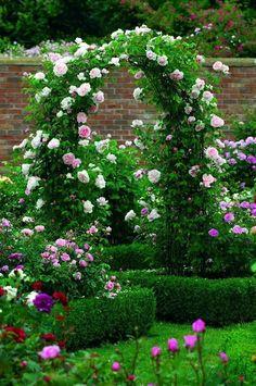 Rose Garden St Swithun - The Fragrant Rose Company -- David Austin climbing roses garden Garden Arbor, Garden Gates, Garden Landscaping, Landscaping Ideas, Backyard Ideas, Boxwood Garden, Garden Trellis, Garden Planters, Herb Garden