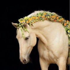 10 Braided Manes Every Equestrian Will Envy Equestrians: These 10 braided manes are sure to give you envy. The post 10 Braided Manes Every Equestrian Will Envy appeared first on Diy Flowers. All The Pretty Horses, Beautiful Horses, Animals Beautiful, Horse Photos, Horse Pictures, Animals And Pets, Cute Animals, Horse Braiding, Horse Mane Braids