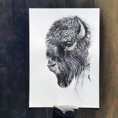 Buffalo by ellaquaint 2016 Charcoal on watercolour paper http://ellaquaint.com/