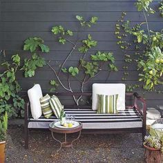 14-gauge wires pulled taut through eye hooks screwed into the wall are the supports for these espaliered fruit trees. | Photo: Thomas J. Story | thisoldhouse.com