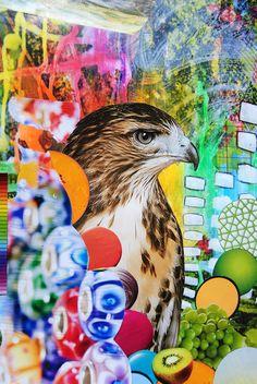 Psychedelic Hawk, http://johnturck.tumblr.com/