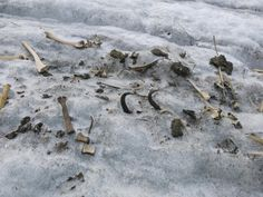 Nicht nur Menschliches gibt der Gletscher frei. Hier sind es die sterblichen Überreste einer Gemse. (Bild: Caroline Fink)