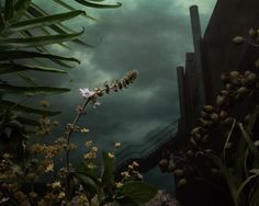 Botanical Inquiry 01: Defunct Industrial Site by Daniel Shipp