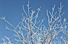 Frosty Branch - A branch in front of the blue sky covered in ice crystals.