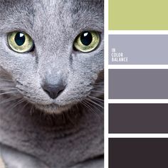 Gentle colors of ocean are showed well in this color palette. The palette combines shades of turquoise and blue, gray and light green are the bright accent Colour Pallette, Colour Schemes, Color Combos, Color Balance, Balance Design, Blue Cats, Gray Cats, Russian Blue, Cat Colors